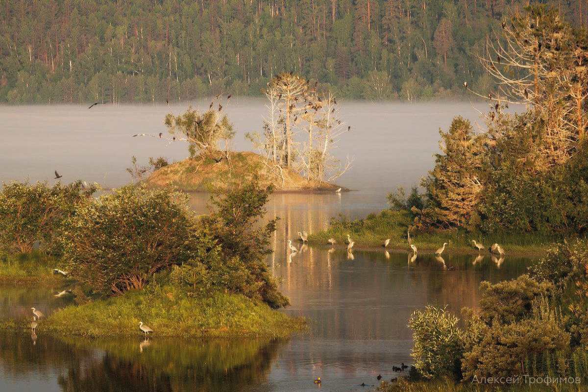 Scientific results of water birds monitoring on Lake Baikal