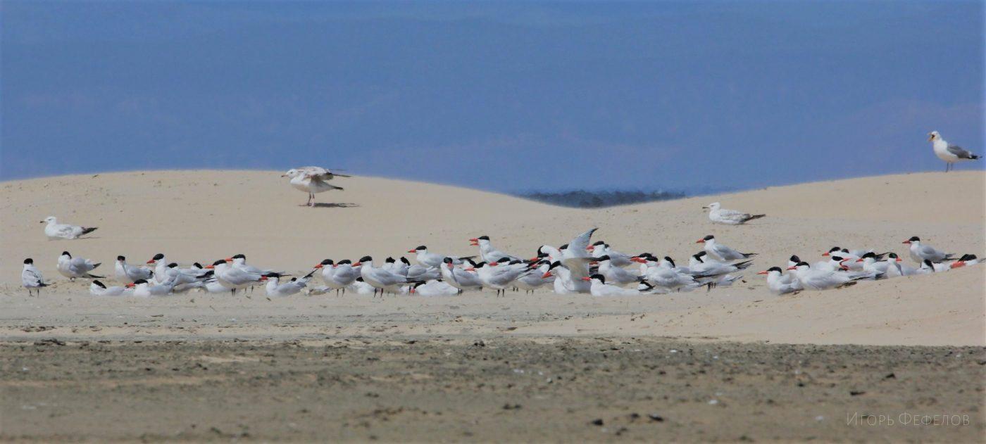 Сила фундаментальной науки: в поисках новой научной информации о птицах на Байкале