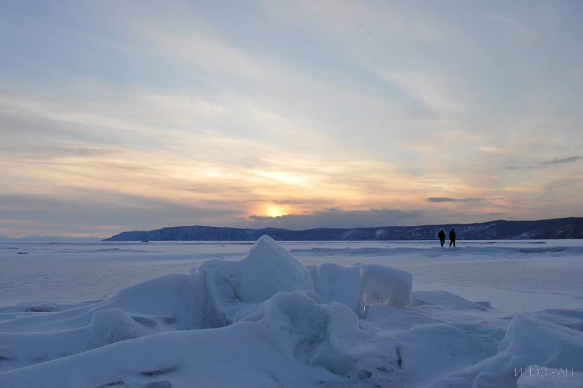 Ученые ИПЭЭ РАН согласовали план по мечению нерпы на Байкале