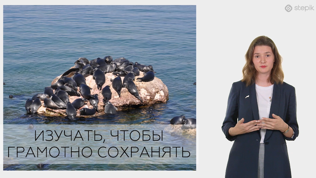 Call for participation in the 2nd environmental lesson on the Baikal seal