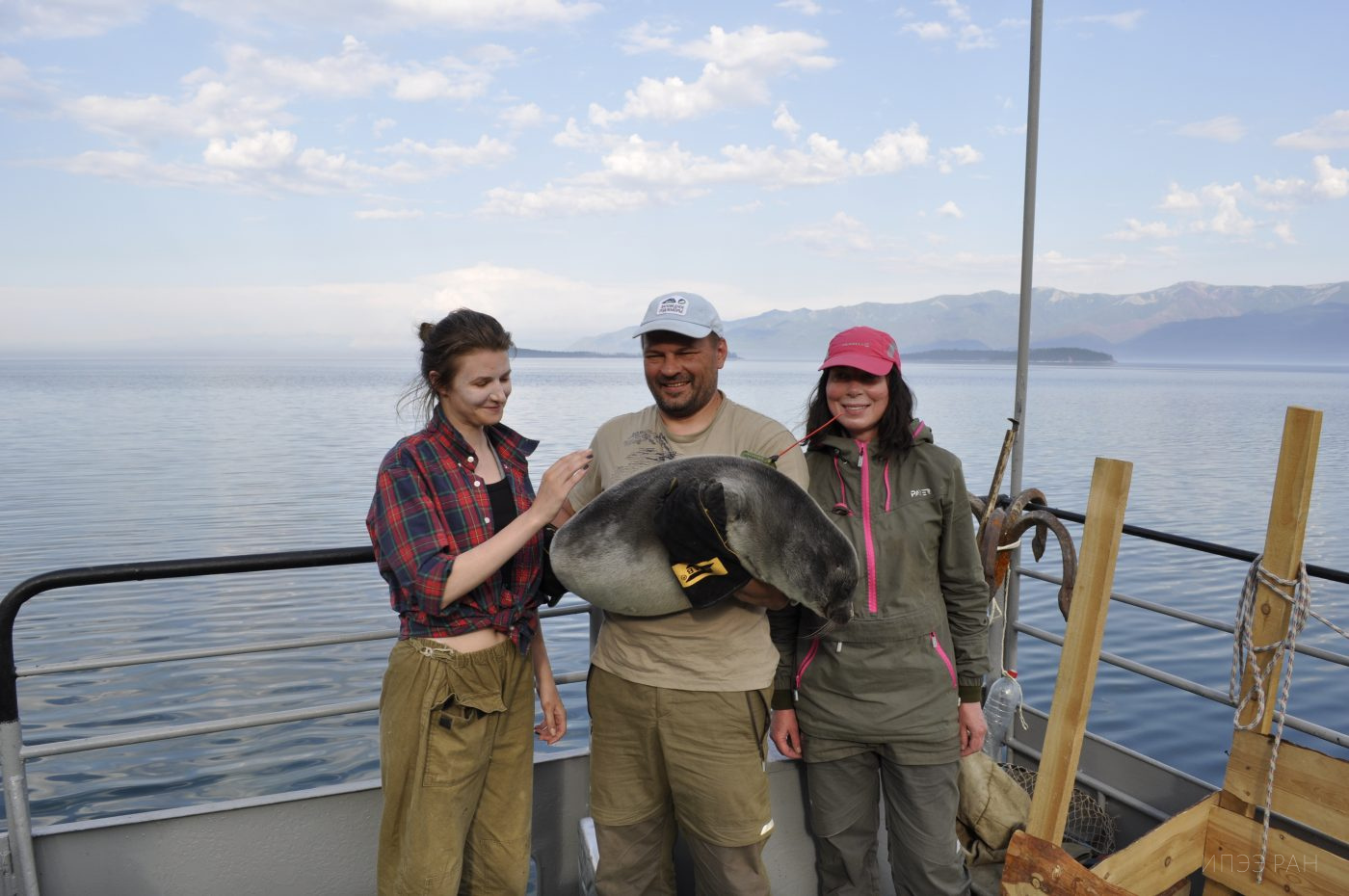 The expedition for tagging the Baikal seal is successfully completed