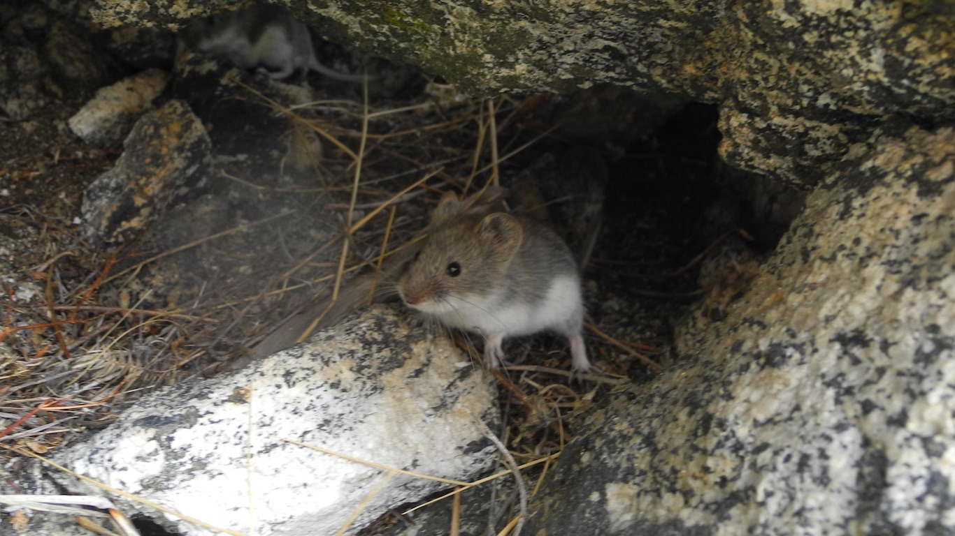 The results of the project «Saving the Olkhon Vole!»