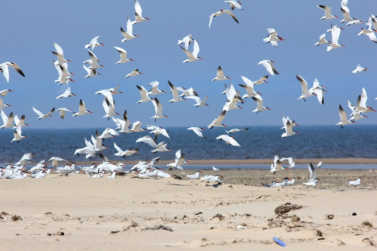 The results of the project on water birds monitoring on the South of Baikal
