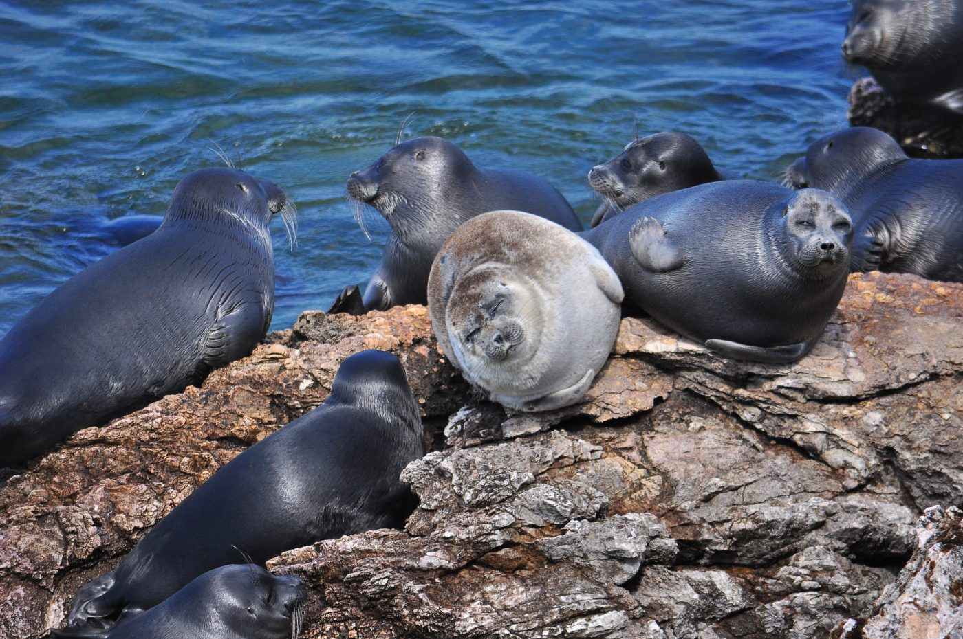 The project to study the Baikal seal was included in the top 100 projects of the presidential grants Fund