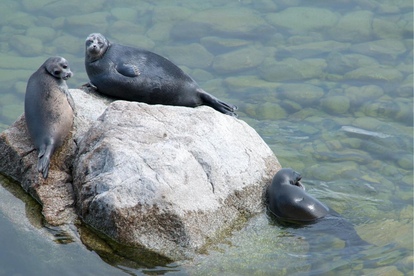 The Baikal seal Research Program for 2020-2025 was developed and approved