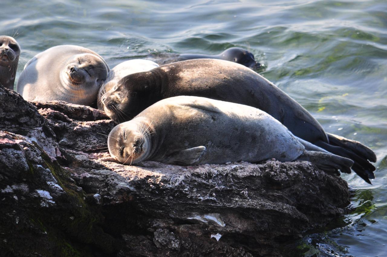 Lake Baikal Foundation put the Baikal seal into international environmental agenda