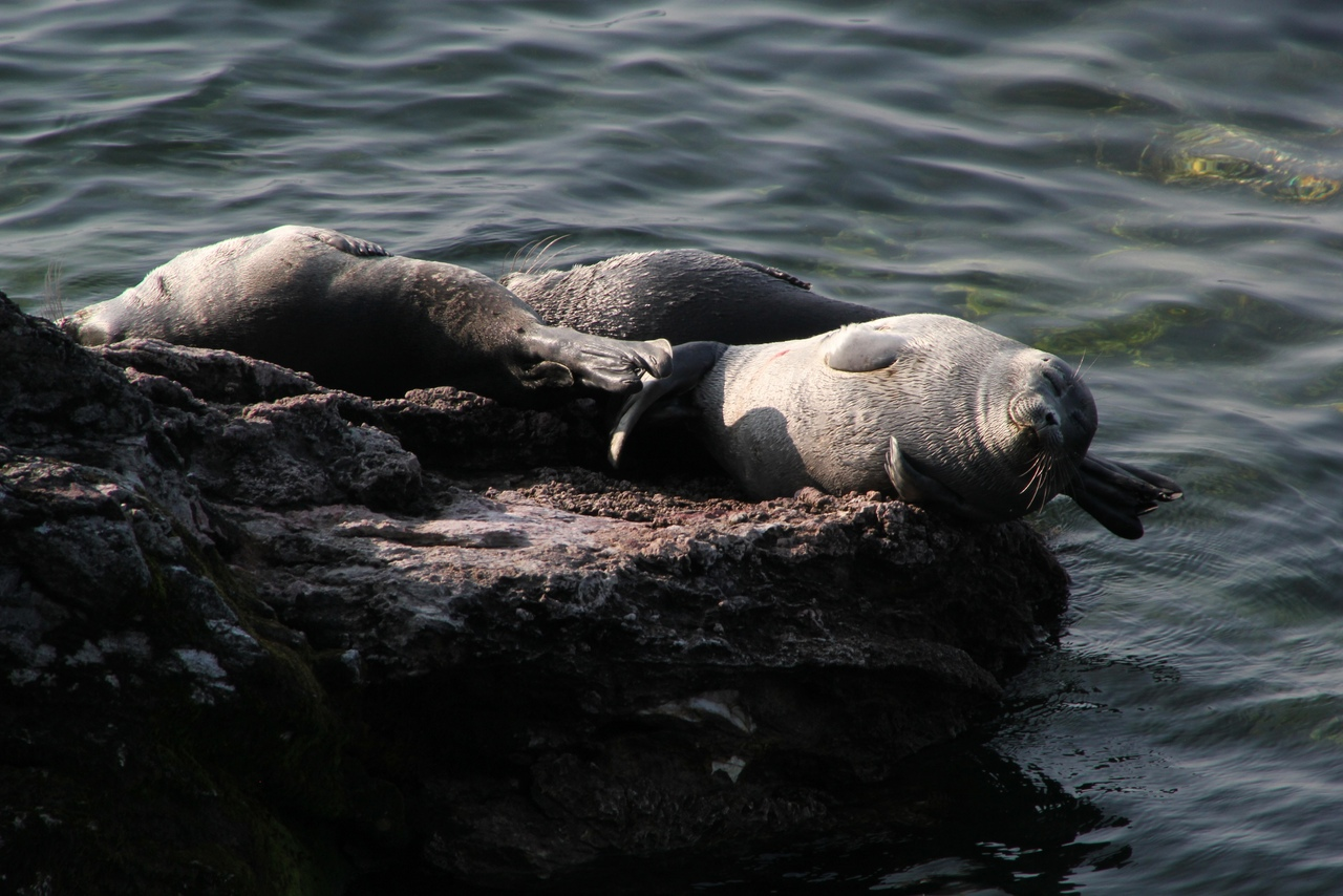 The results of hormonal and serological studies of the Baikal seal