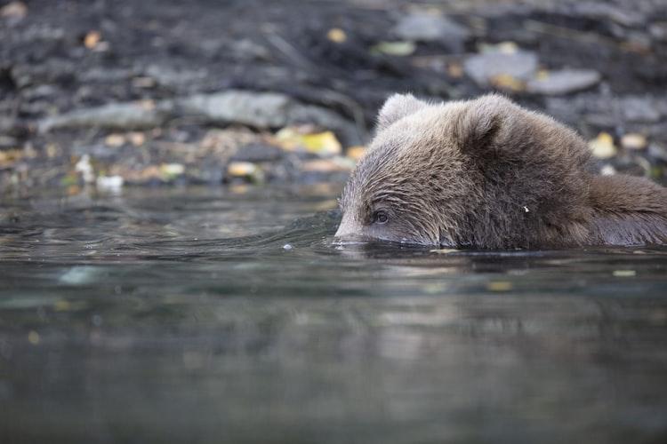 Bear Shore – scientific expedition